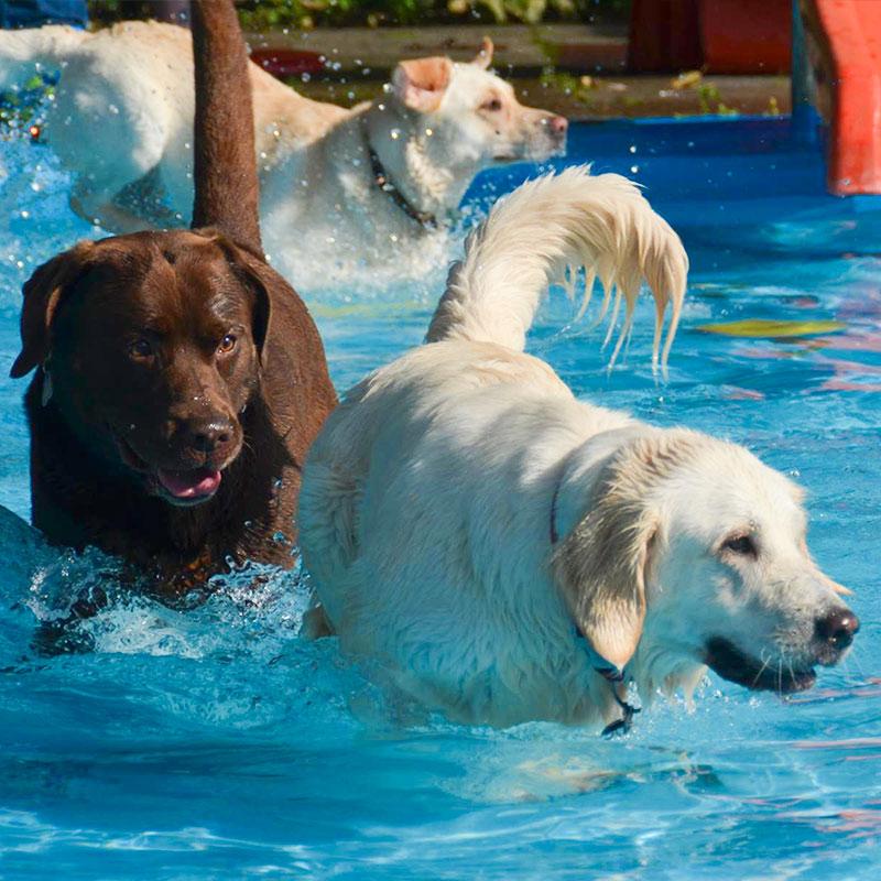 Hundeschwimmen, 27.09.2020